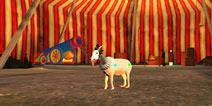 僵尸山羊小丑羊怎么得 全新山羊获取攻略