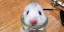 """图样图森破:来看看那些被""""困""""住的小动物"""