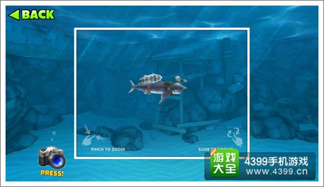 饥饿的鲨鱼灰鲭鲨