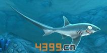 饥饿鲨世界3D长尾鲨