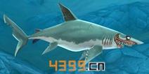 饥饿鲨世界3D灰鲭鲨