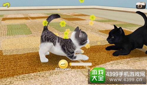《掌中猫咪》