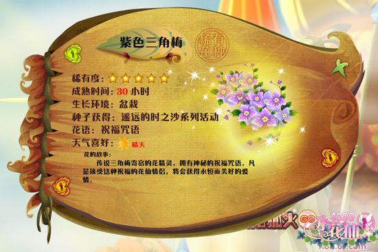 小花仙紫色三角梅