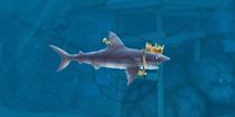 饥饿鲨进化灰鲭鲨贝壳位置图 灰鲭鲨贝壳位置分享