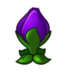 缩小紫罗兰
