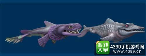 饥饿的鲨鱼进化皱鳃鲨有哪些不知道的小知识