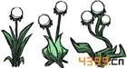 饥荒手机版巨人王朝植物大全汇总