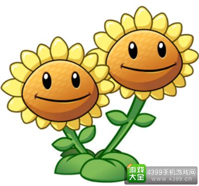 4级双头向日葵