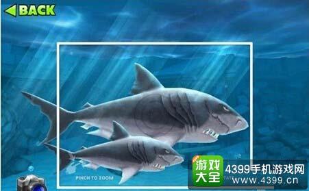 独角巨鲸_饥饿鲨:进化独角鲸和巨齿鲨哪个强 对比解析_4399饥饿鲨:进化