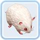仙境传说ro白鼠卡片