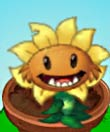 植物大战僵尸2原始向日葵图鉴 原始向日葵属性技能