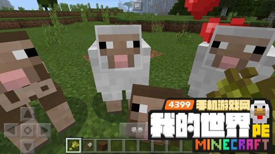 我的世界羊怎么驯服 手机版羊在哪里羊怎么抓