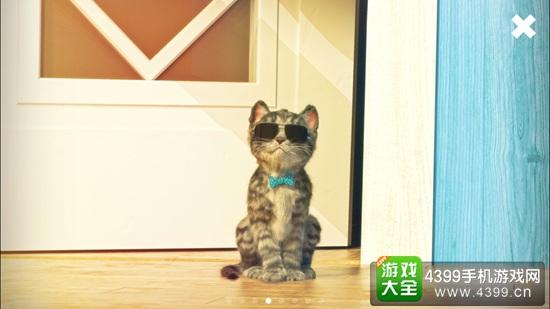 可爱猫咪的欢乐时光 《我最喜爱的猫猫》评测