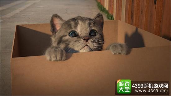 我最喜爱的猫猫