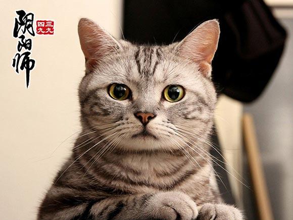 阴阳师九命猫信物