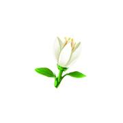 造梦西游5明灵花