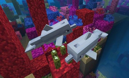 我的世界海豚怎么骑