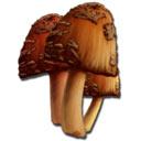 方舟生存进化稀有蘑菇