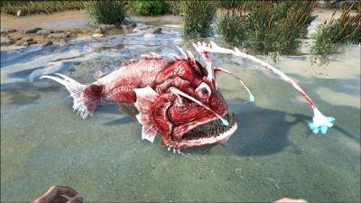 方舟生存进化安康鱼