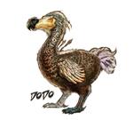 方舟生存进化渡渡鸟饲料怎么做