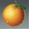 创造与魔法柑橘