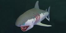 创造与魔法幼鲭鲨