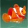 创造与魔法小丑鱼在哪里钓 小丑鱼位置