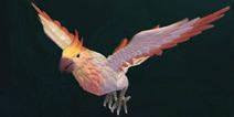 创造与魔法云斑鹦鸟