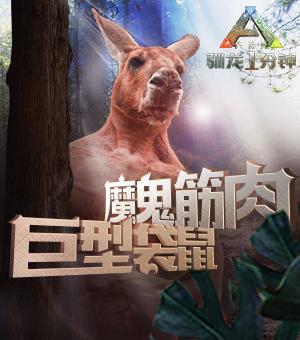 【驯龙一分钟】魔鬼肌肉—巨型袋鼠