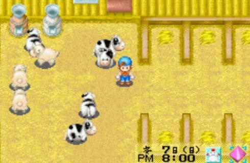 牧场物语养牛