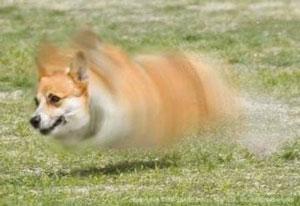 旋风飞行犬
