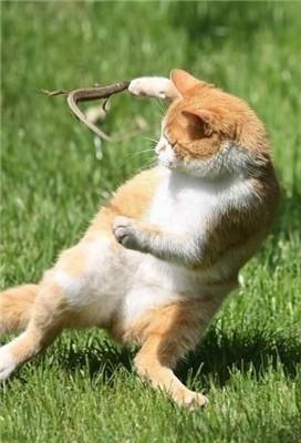 原本以为的功夫猫但其实真正强的是蜥蜴