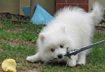 宝可梦剑盾