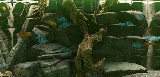 鱼缸模拟器