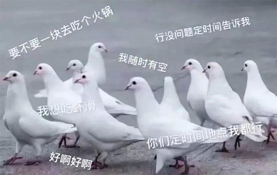 人生就是一首鸽,是兄弟的跟我一起唱:咕, 咕咕咕~