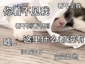 春节玩这几款游戏,妈妈看了都说好