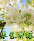 小花仙零氪穿搭1之春季穿搭(套装)