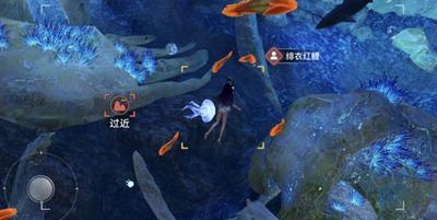 天谕手游冒险任务 水母之梦